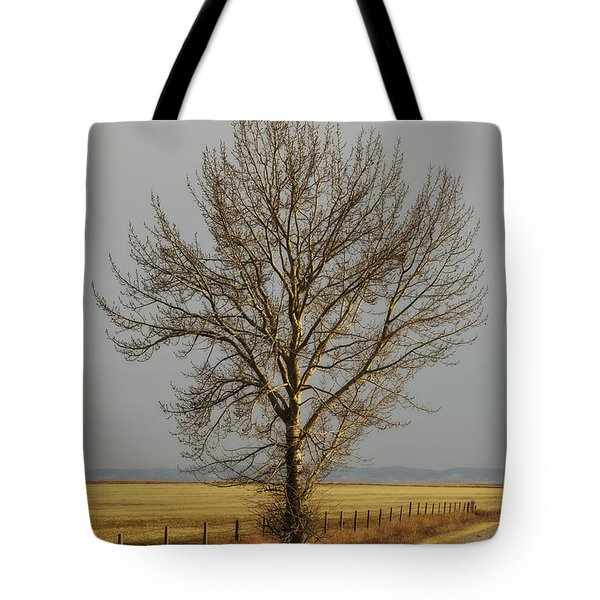 A Poplar Tree By The Side Of A Gravel Tote Bag by Roberta Murray