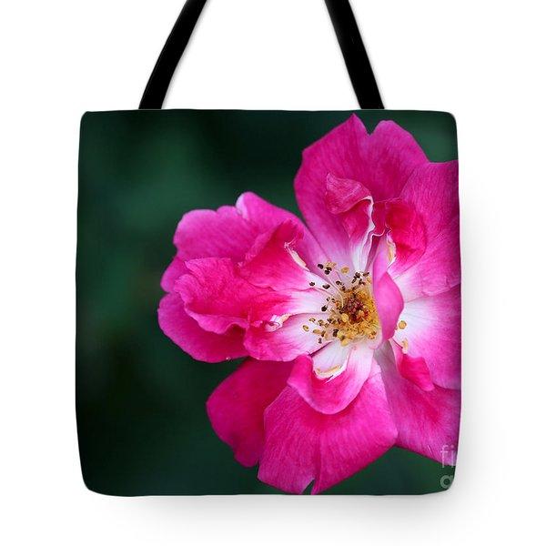 A Pretty Pink Rose Tote Bag by Sabrina L Ryan