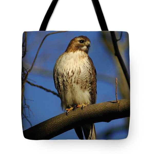 Tote Bag featuring the photograph A Red Tail Hawk by Raymond Salani III