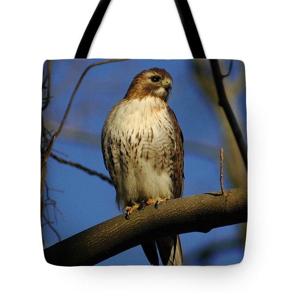 A Red Tail Hawk Tote Bag by Raymond Salani III