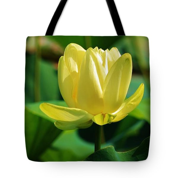 Tote Bag featuring the photograph A Single Lotus Bloom by Bruce Bley