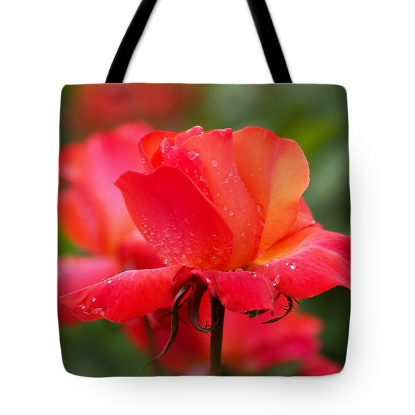 A Tintinara Rose In The Rain Tote Bag by Rona Black
