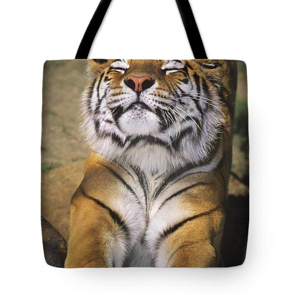 A Tough Day Siberian Tiger Endangered Species Wildlife Rescue Tote Bag by Dave Welling