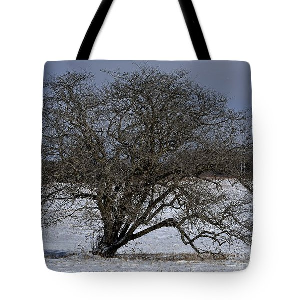 A Tree In Canaan 2 Tote Bag by Randy Bodkins
