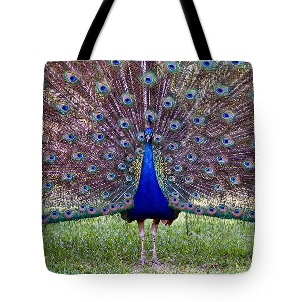Tote Bag featuring the photograph A Vargos Peacock by Tim Stanley
