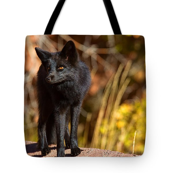 Tote Bag featuring the photograph A Walk In The Sun by Jim Garrison