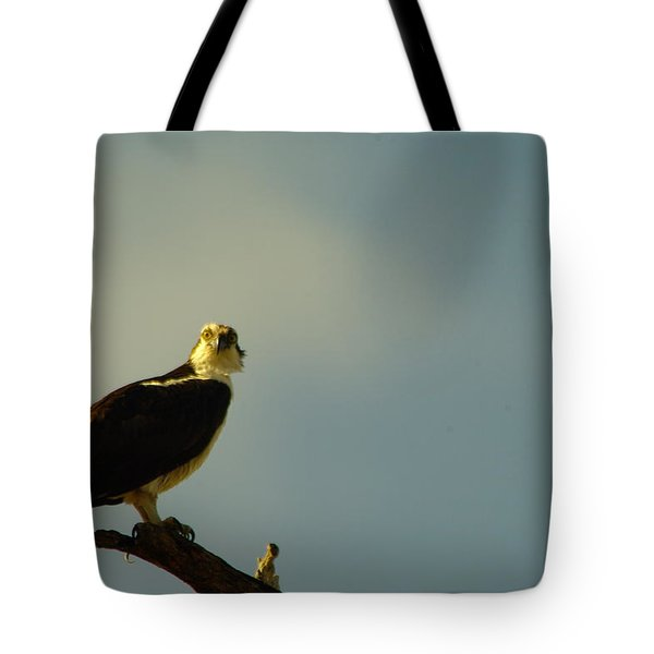 A Wide Eyed Osprey Tote Bag by Jeff Swan
