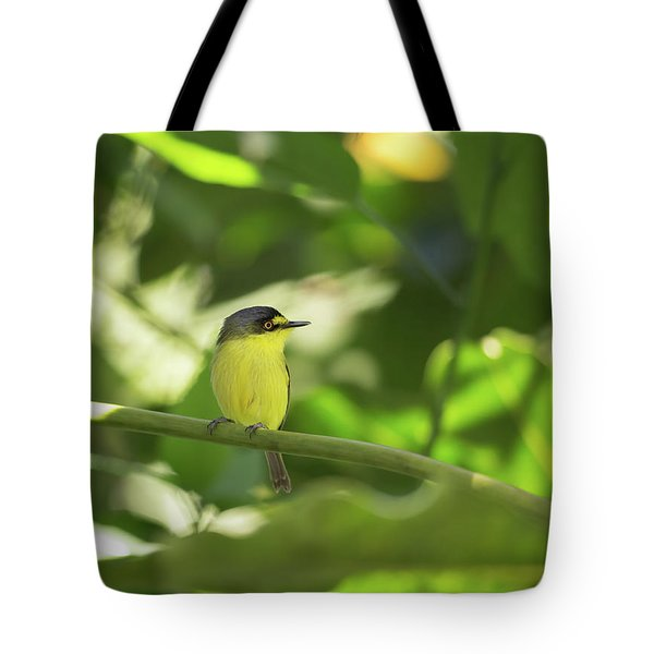 A Yellow-lored Tody Flycatcher Tote Bag