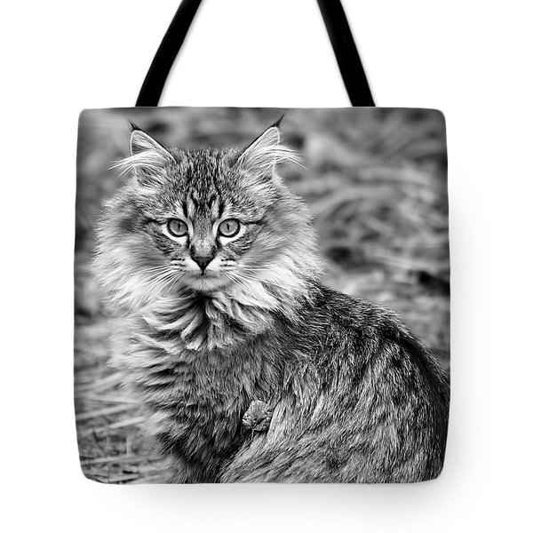 Tote Bag featuring the photograph A Young Maine Coon by Rona Black