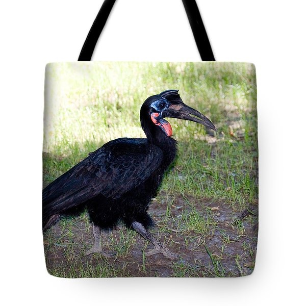 Abyssinian Ground-hornbill Tote Bag by Gregory G. Dimijian