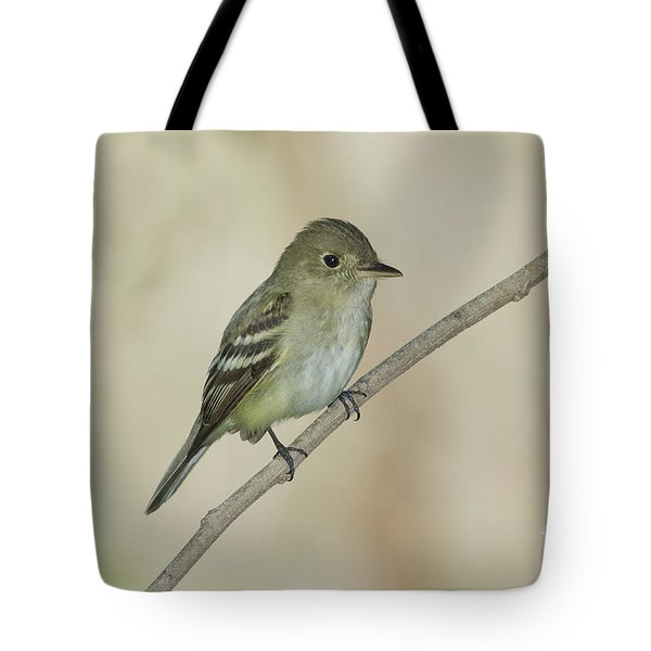 Acadian Flycatcher Tote Bag by Anthony Mercieca