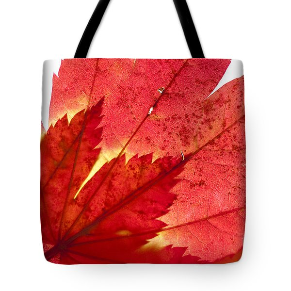 Acer From Beneath Tote Bag by Anne Gilbert