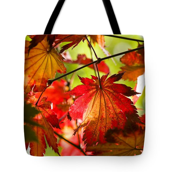 Acer Japonicum O Isami Tote Bag by Anne Gilbert