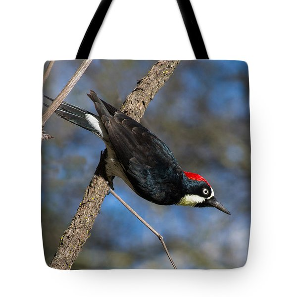 Acorn Woodpecker Tote Bag by Rima Biswas