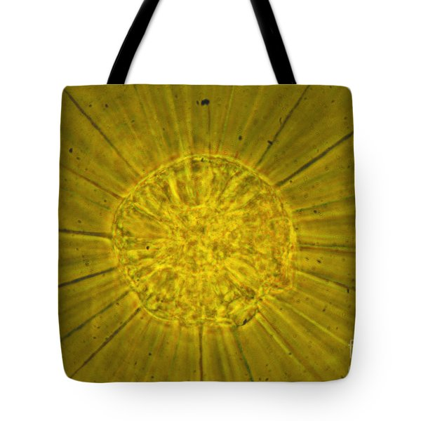 Actinophrys Sol Lm Tote Bag by James W Evarts