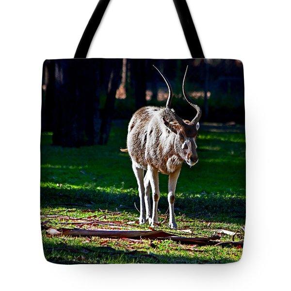Addax Tote Bag by Miroslava Jurcik