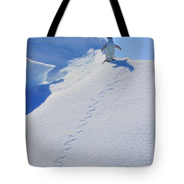 Adelie Penguin On Bergie Bit Tote Bag by Tony Beck