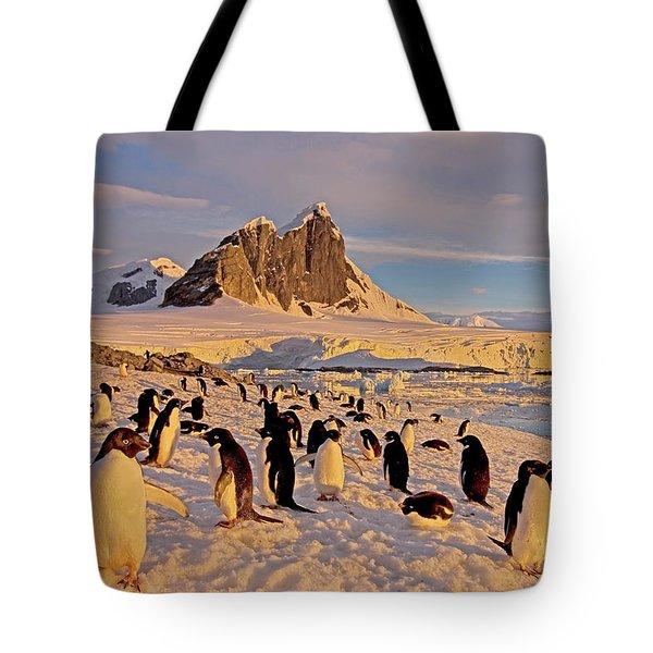 Adelie Penguin, Pygoscelis Adeliae Tote Bag