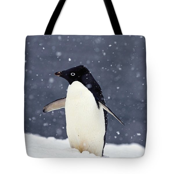 Adelie Penguin Standing In Fresh Tote Bag