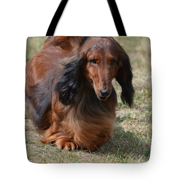 Adorable Long Haired Daschund Dog Tote Bag