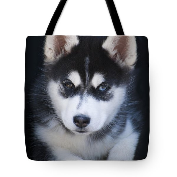 Adorable Siberian Husky Sled Dog Puppy Tote Bag