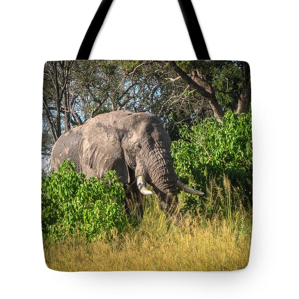 African Bush Elephant Tote Bag