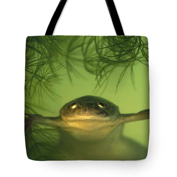 African Clawed Frog Tote Bag