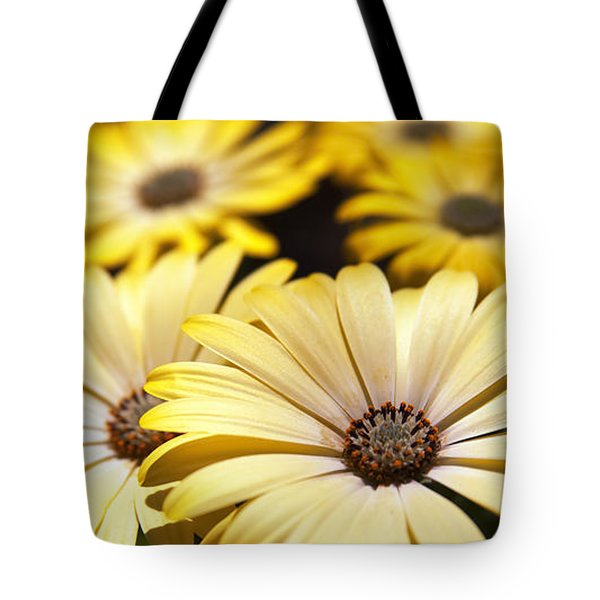 African Daisies Tote Bag by Caitlyn  Grasso