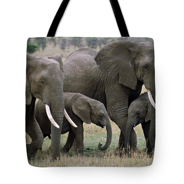 African Elephant Females And Calves Tote Bag