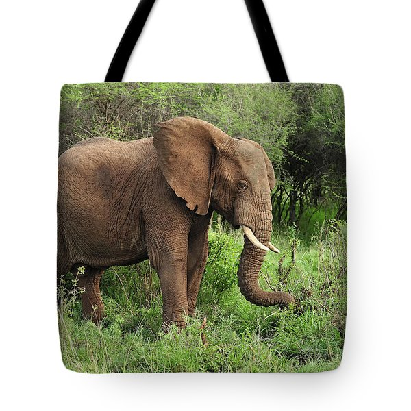 African Elephant Grazing Serengeti Tote Bag