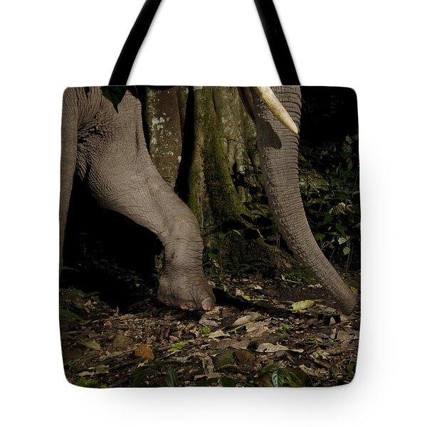 African Elephant Night Walk Kibale Np Tote Bag