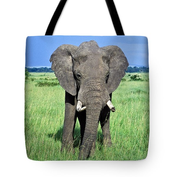 African Elephant Tote Bag by Tina Manley