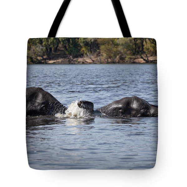 African Elephants Swimming In The Chobe River Botswana Tote Bag