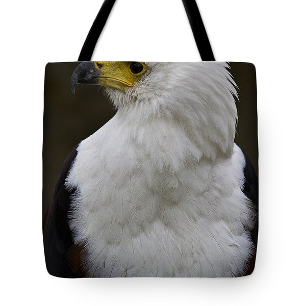 African Fish Eagle 4 Tote Bag by Heiko Koehrer-Wagner