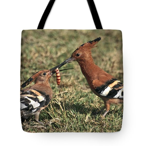 Tote Bag featuring the photograph African Hoopoe Feeding Young by Liz Leyden