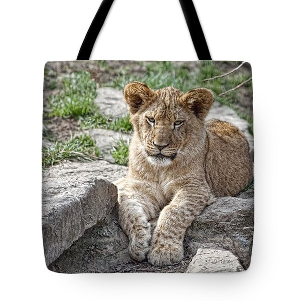 African Lion Cub Tote Bag by Tom Mc Nemar