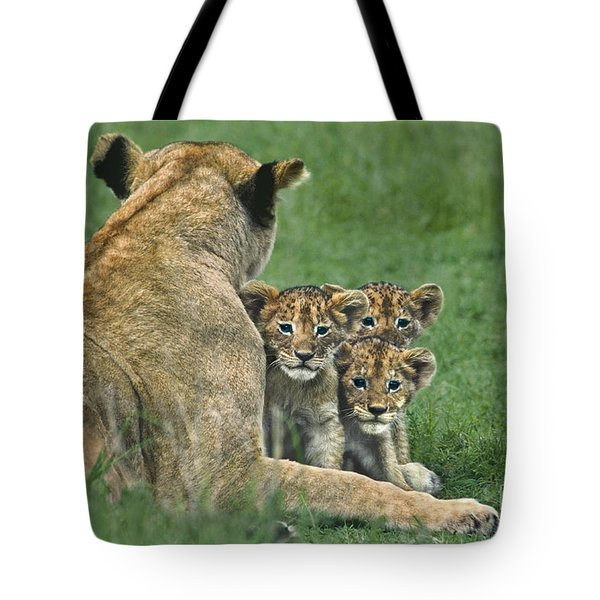 Tote Bag featuring the photograph African Lion Cubs Study The Photographer Tanzania by Dave Welling