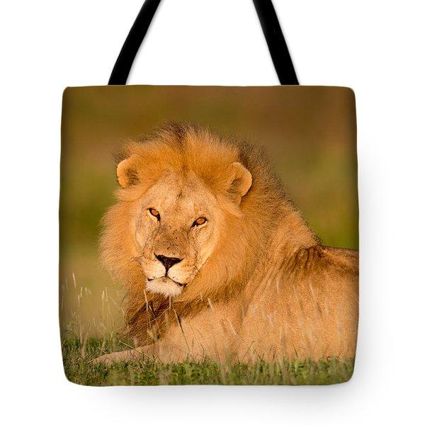 African Lion Panthera Leo, Ndutu Tote Bag