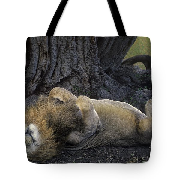 Tote Bag featuring the photograph African Lion Panthera Leo Wild Kenya by Dave Welling