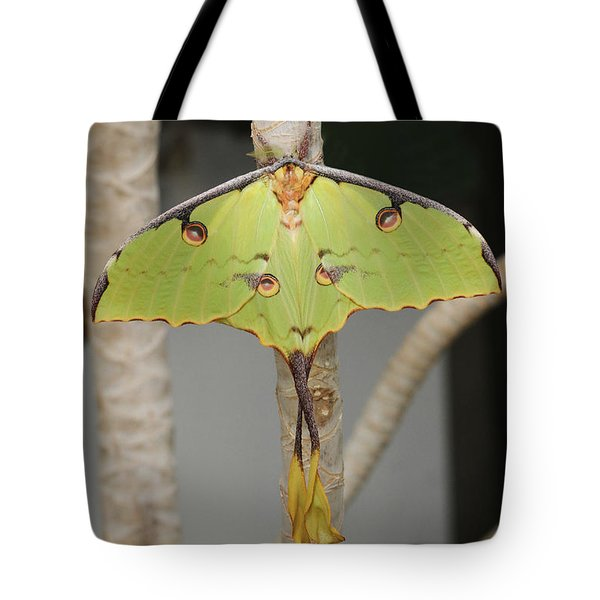 African Moon Moth Tote Bag
