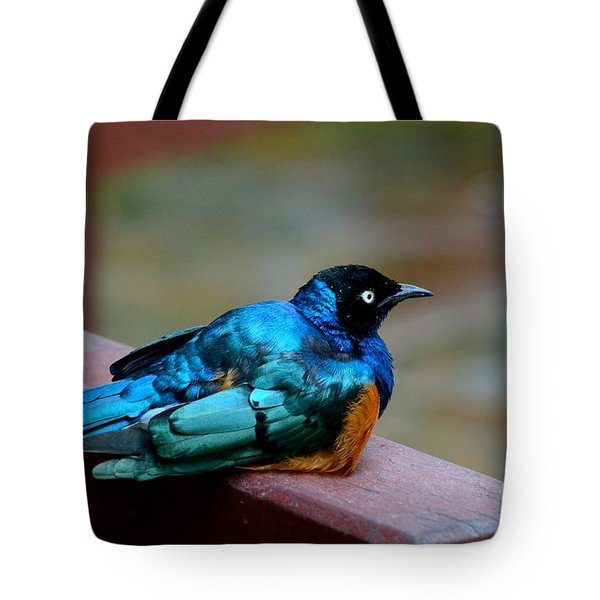 African Superb Starling Bird Rests On Wooden Beam Tote Bag