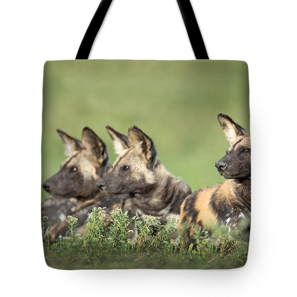 African Wild Dogs Lycaon Pictus Tote Bag