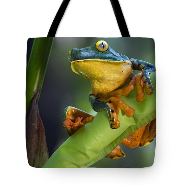 Agalychnis Calcarifer 4 Tote Bag