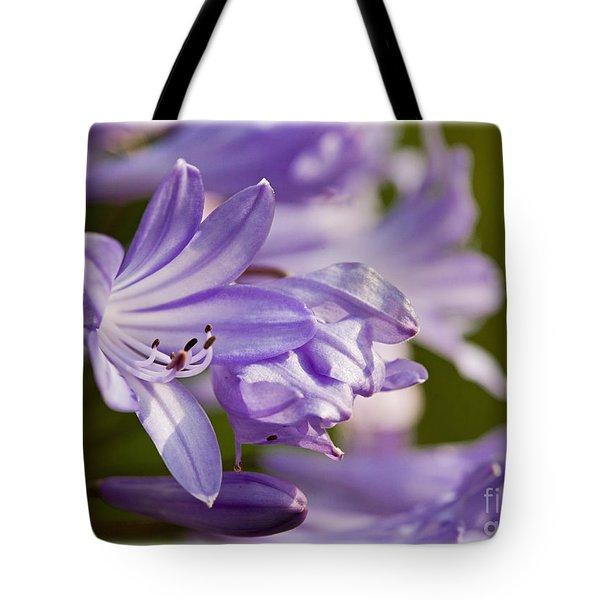 Agapanthus Tote Bag by Liz  Alderdice