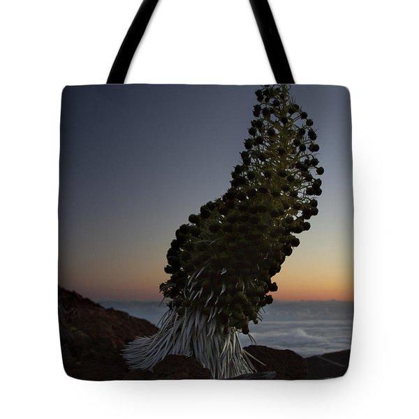 Ahinahina - Silversword - Argyroxiphium Sandwicense - Summit Haleakala Maui Hawaii Tote Bag by Sharon Mau