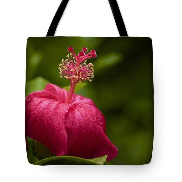 Akalewa Tote Bag