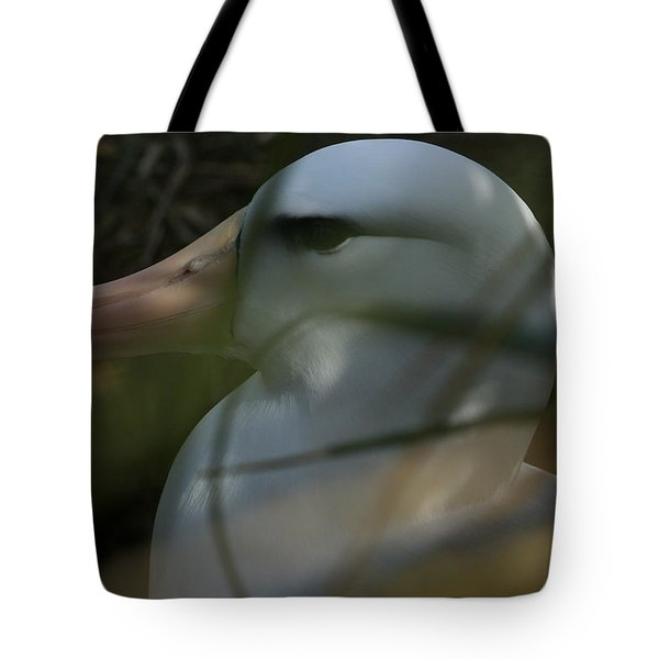 Tote Bag featuring the photograph Albatross by Amanda Stadther