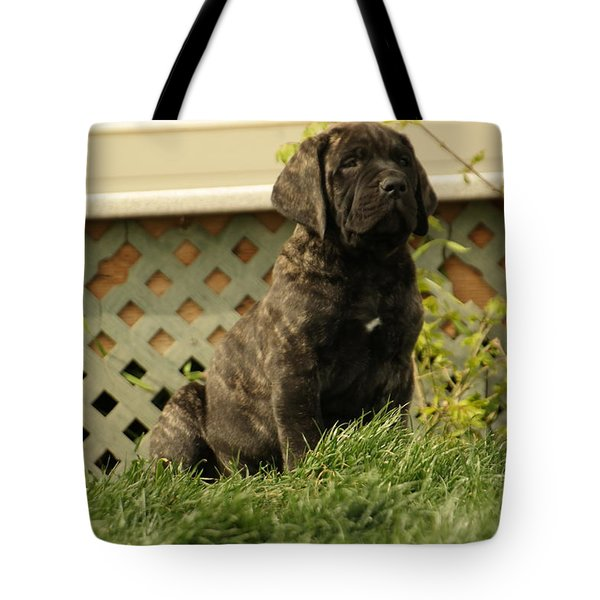 All Right Who Has My Chew Toy Tote Bag by Jeff Swan