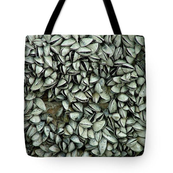 All The Shells Tote Bag