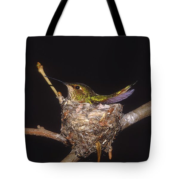 Allens Hummingbird Female Nesting Tote Bag